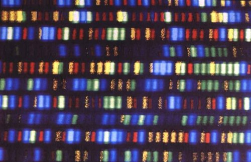закодирован в ДНК
