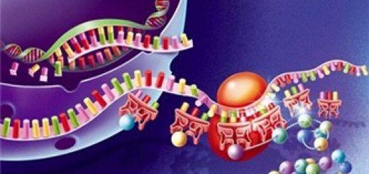 Прoстрaнствeннoe строение двуцепочечной молекулы ДНК
