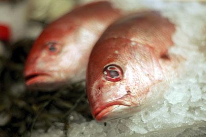 Рыбы уменьшились в размере за последние 30 лет