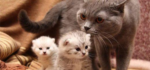 опыты с домашними кошками