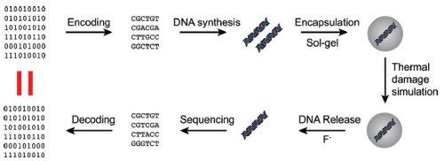 Технологии использования ДНК