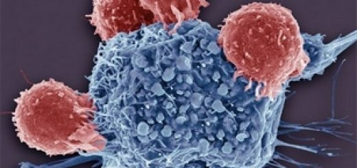 механизм распознавания поражённых клеток