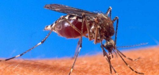 Комаров будут обманывать приманками